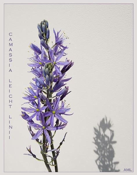 botanical by daylight by annefromleo