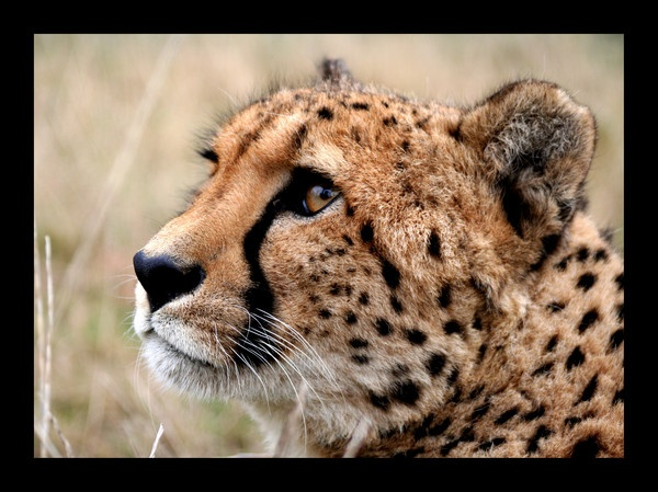 Big Cats by katep1