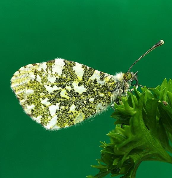 Flutterbye! by kenp