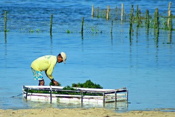 Seaweed Farmer by jkennedy