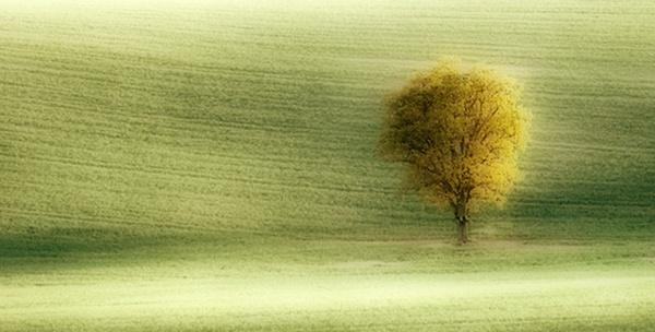 Single Tree by Steve-T