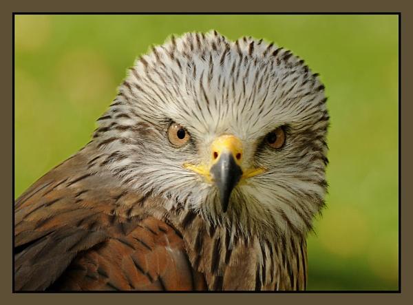 Bird of Prey 6 by m3lem
