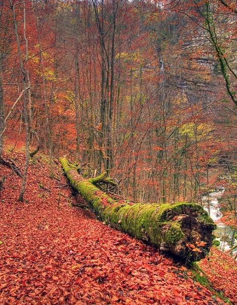 Autumn by davor