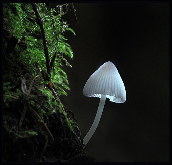 Forest Mushroom by viscostatic