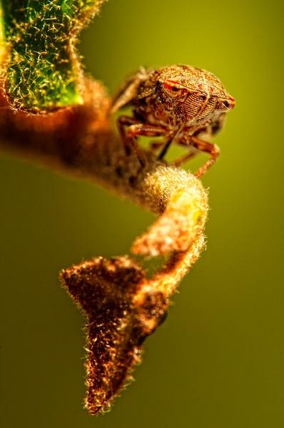 Leaf Hopper by GarethRobinson
