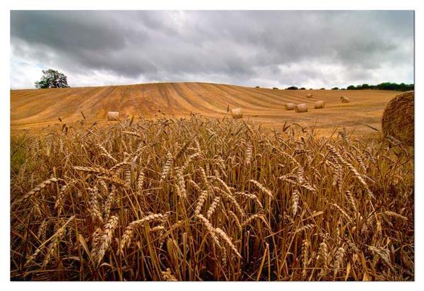 Woodside harvest by Dugi34