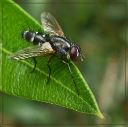 five filthy flies