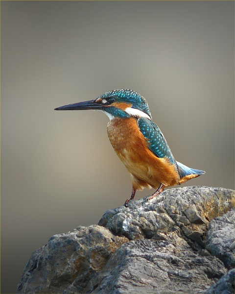 Crete Kingfisher 3 by Graham_P