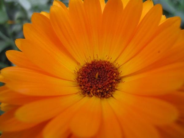 Orange flower by dannyboyok