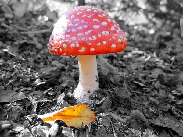 Mushroom! by dannyboyok