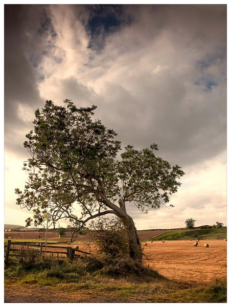 Prevailing Wind by john short