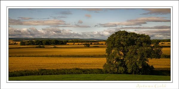 Autumn gold by allan_j