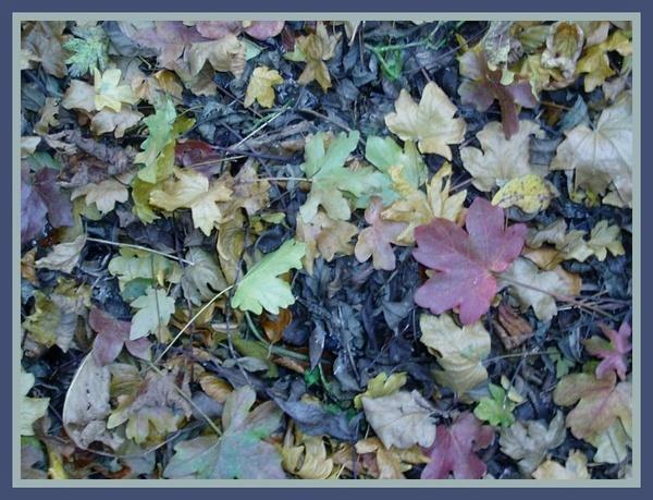 Autumn Blues by BarrySaich