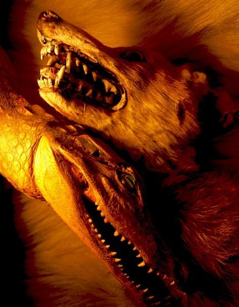 Fox and a Crocodile. by Charteris