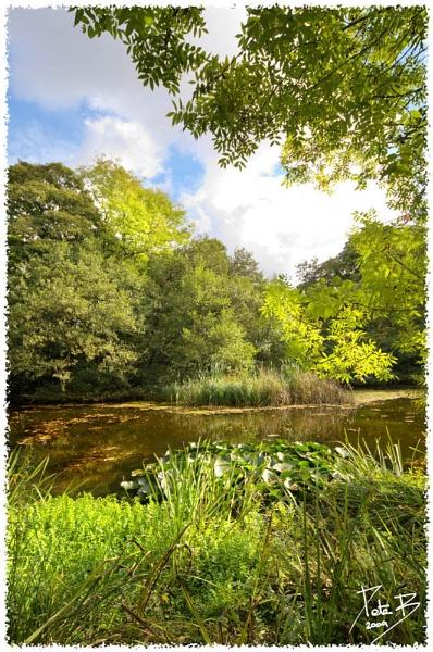 Lilleshall Pool by pberridge