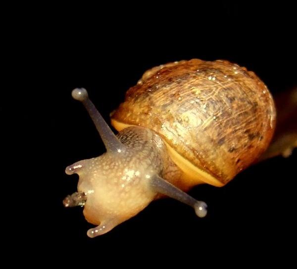 Snail by vickyal