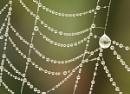 Natures Jewellery