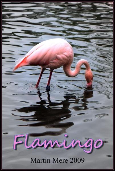 Pink Flamingo by DJLeroy