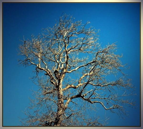 Winter Tree by scotyboy