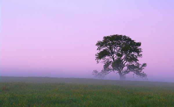 Lone tree of the Wiltshire Downs by petemasty