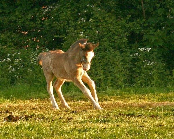 Dancing foal by wonkers