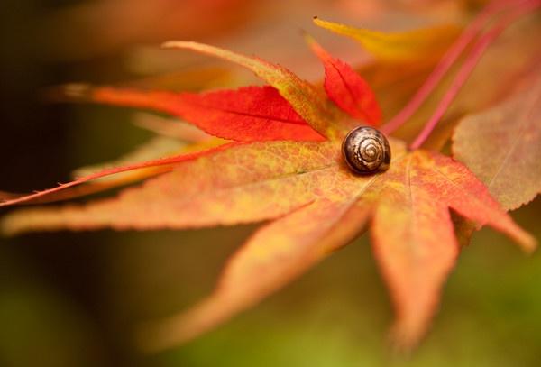 Winkworth Autumn by antonye