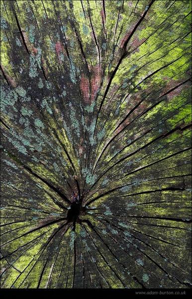 Tree trunk section by adamburton