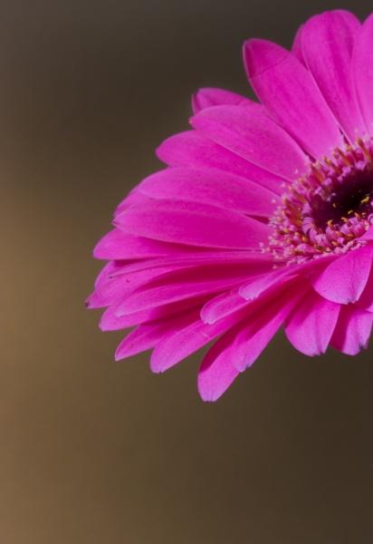Flower by Britman