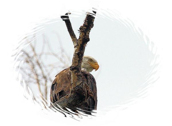 EAGLE EYE\'S by chuckspics