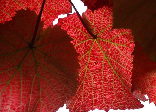 Leaf Light by Jennie277