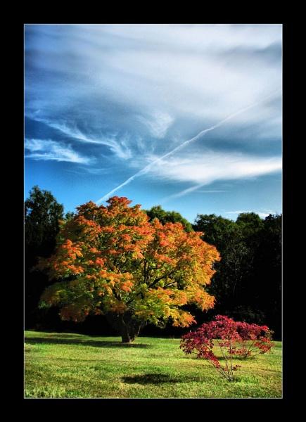 Cherkley View by Swanvio