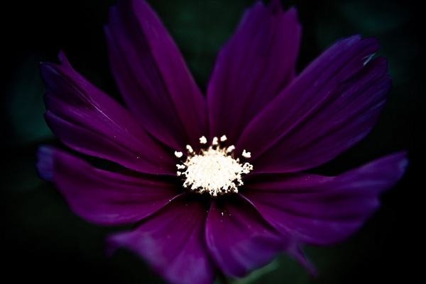 Dark Flower by andywest