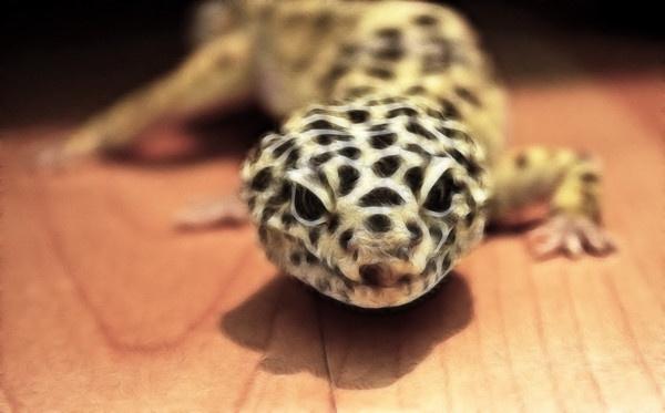 Leopard Geko by Sean_Dillon