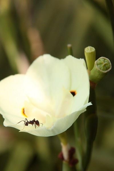 bug\'s life by msmphoto