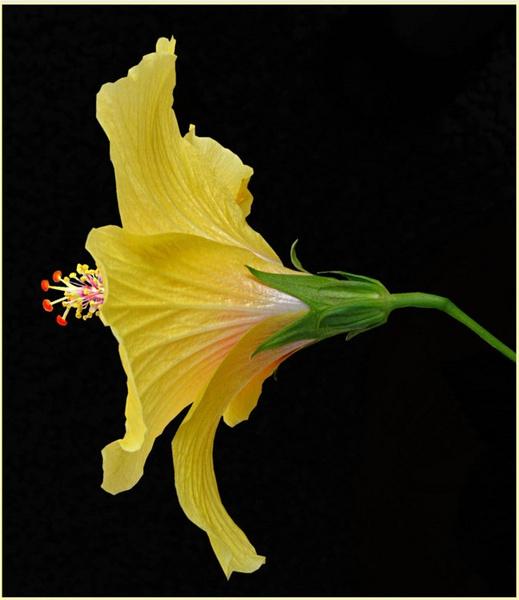 Simply Yellow by csopi