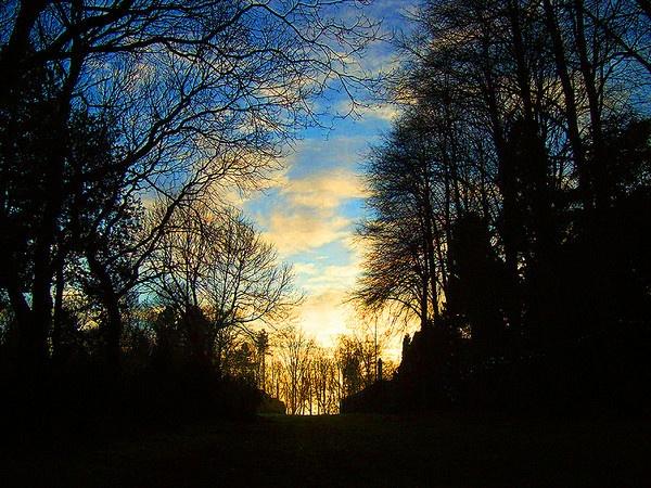Winter woodland Morning by ChrisBilton