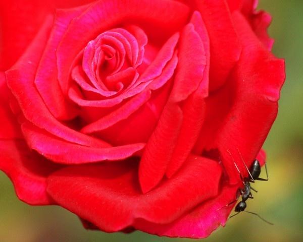 Red & Black by maheshkar