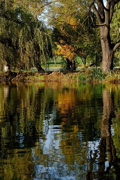 Almost autumn by Gabicat