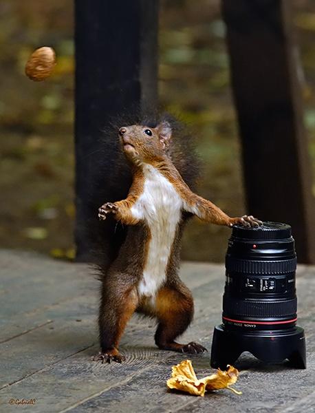 Lens or nut? by Gabicat