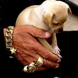 The dog sller