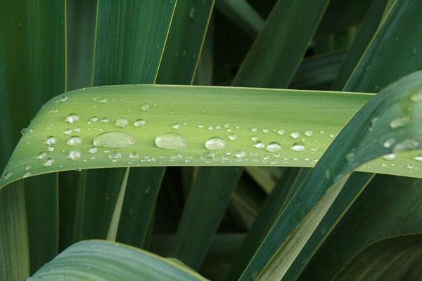 raindrops by PrincessPudding