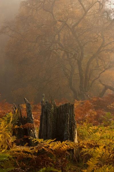 Autumn Mist by almiles