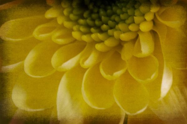 Memories of Spring by pixor