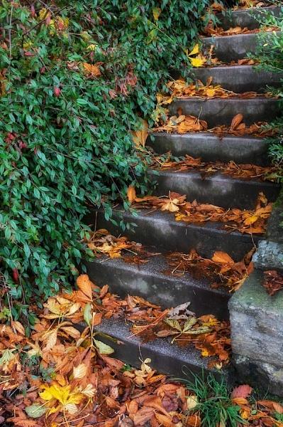 Autumn Steps by pixor