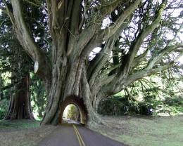 A road runs through it.