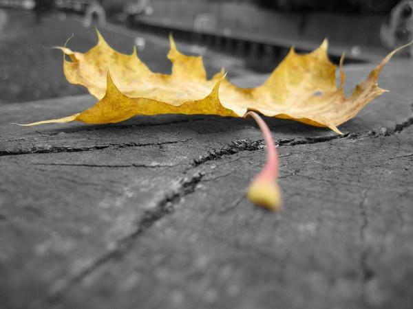 Autumn Leaf by dannyboyok