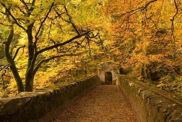 Hermitage Autumn by RosePhoto