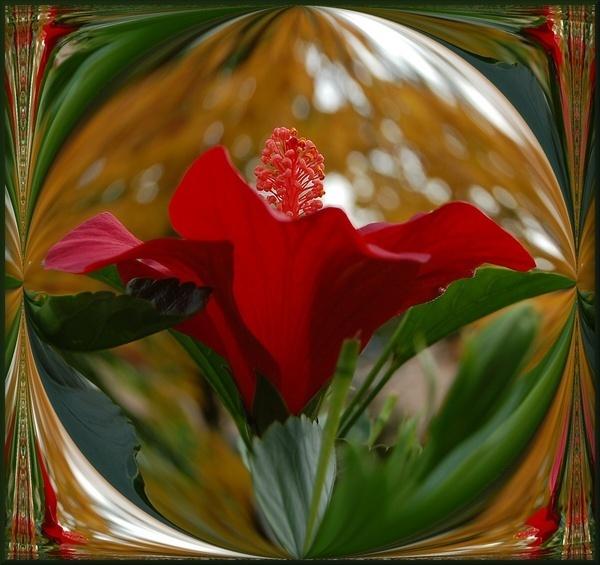 hibiscus by CherryMartin