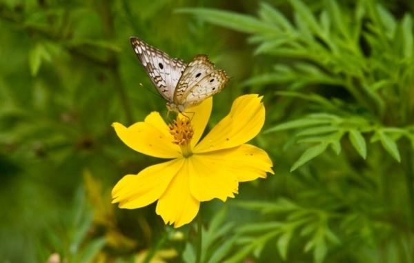 Butterfly by darrylhp