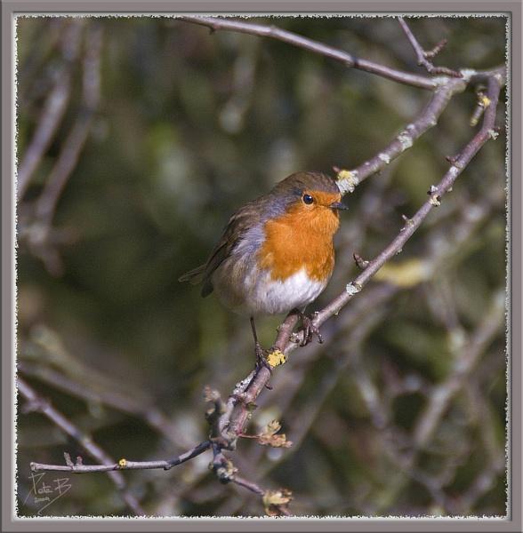Is it Christmas yet? by pberridge